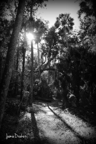 This is a shot from the trail to the cistern JamieDrake©
