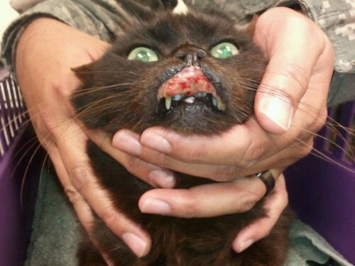 Rodent Ulcer: SEVERE Eosinophilic Complex