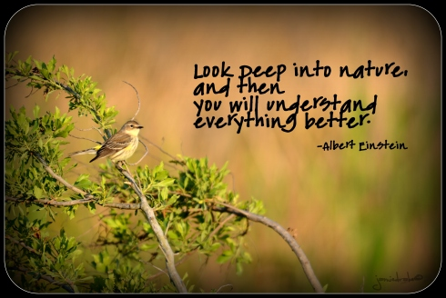 Look Deep into nature...