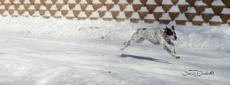 Luna in Snow