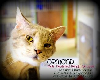 OrmondLookingforlove